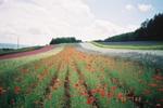 Flower_garden_array