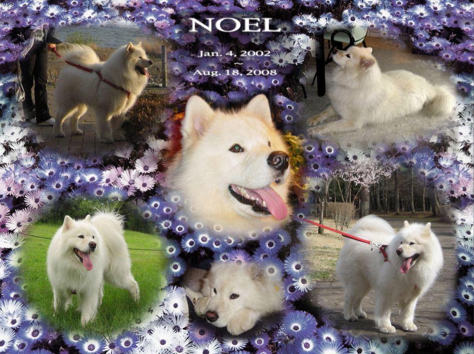 Noel1003